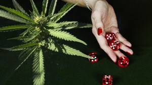 Cannabis Problem Gambling