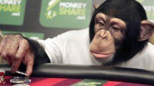 Gambling Monkeys