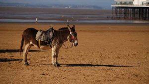 gambling donkey